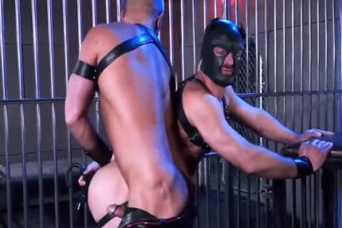 Leather Dogs